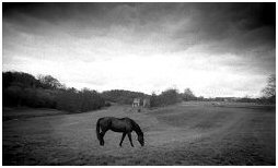 (4C)   Black horse on the grounds of ROCHE ABBEY