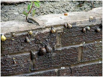 Snails crawling up the wall