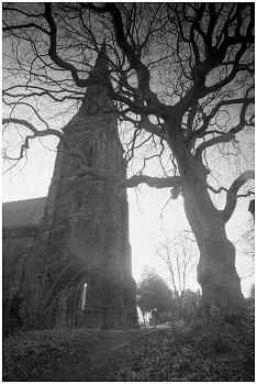 Chapel and tree